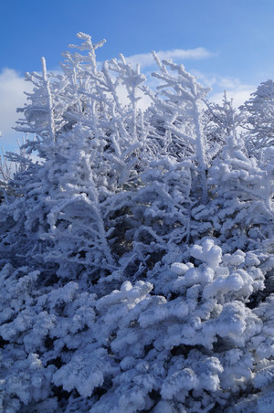 Frosted trees at the summit