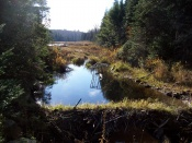 Another pond with beaver activity